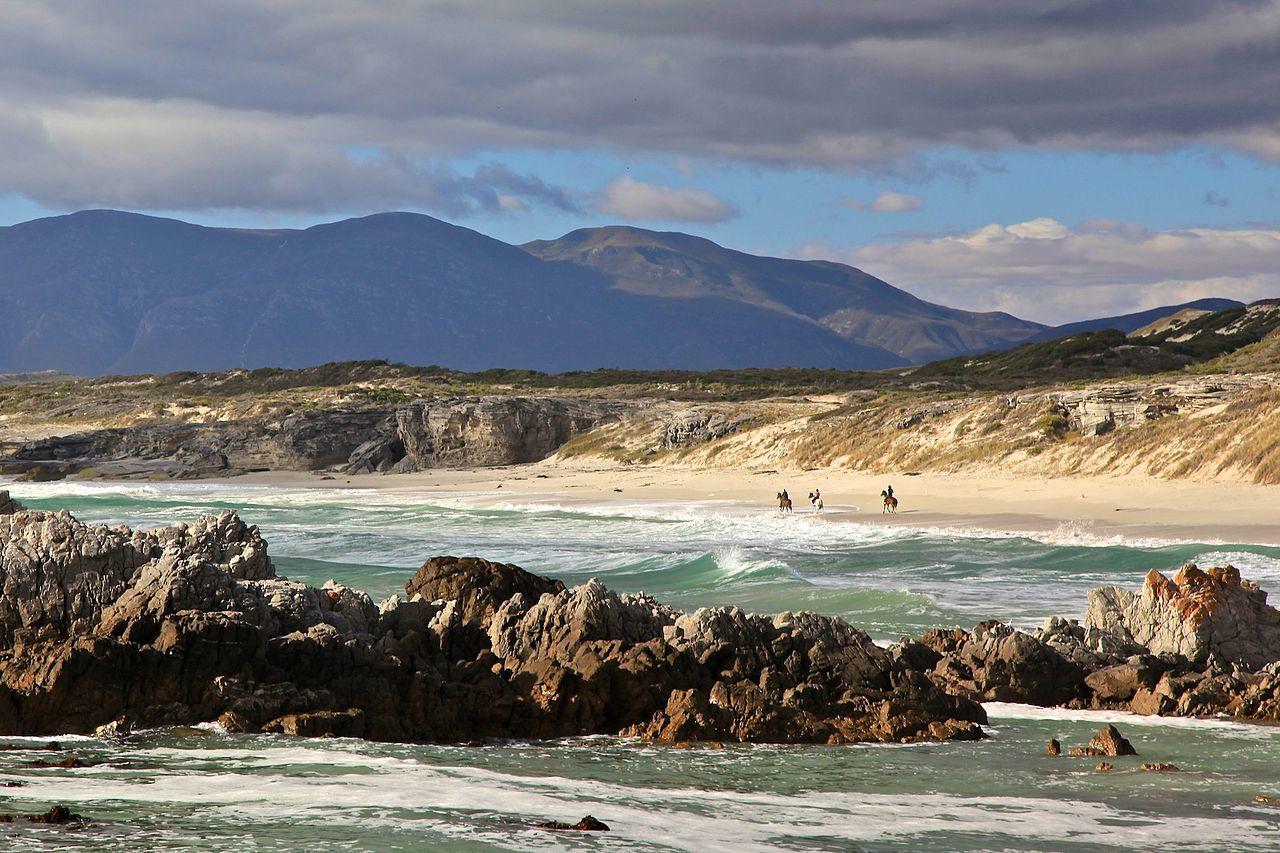 Attenzione: queste spiagge sono dove ci sono i più squali del mondo Quotes