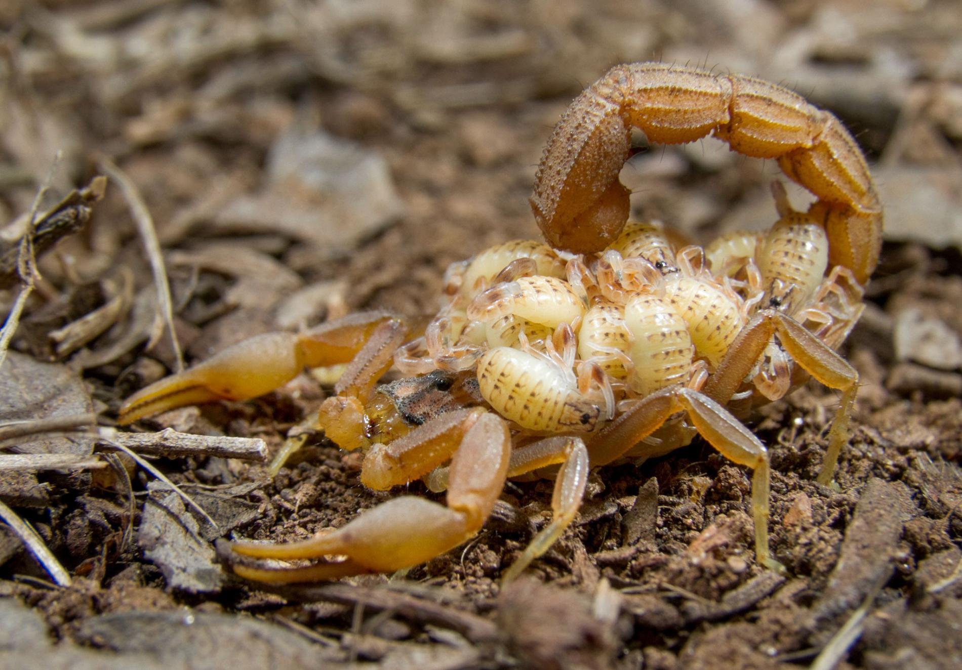 10 faits fascinants sur les scorpions Quotes
