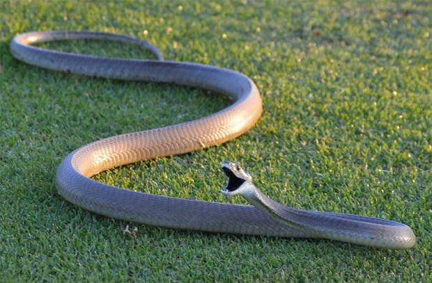 15 trucs choquants qu'on ne sait pas sur les serpents Quotes