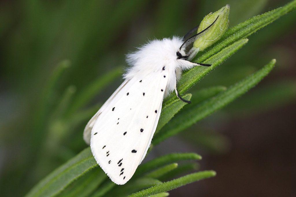 Les 20 insectes les plus étranges du monde Quotes