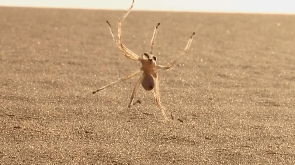 Ces araignées dotées de capacités surprenantes Quotes